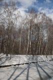 Wczesny wiosna krajobraz z parkiem obraz stock
