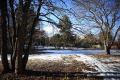 Wczesny wiosna park Zdjęcie Stock