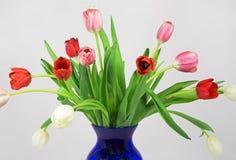 Wczesny wiosna tulipanu bukiet Obraz Stock