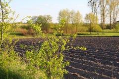 Wczesny wiosny pole siający rolnikiem Kultywujący pole zdjęcie royalty free