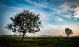 Wczesnych poranków drzewa Fotografia Royalty Free