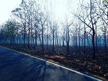 Wczesnych poranków mgliści drzewa Zdjęcie Royalty Free
