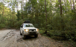 A 4wd on Fraser Island. A 4wd in the forest on Fraser Island Royalty Free Stock Photo