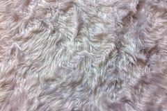 Wełien tła tekstury, zbliżenie Naturalna Miękka Biała Zwierzęca Puszysta Futerkowa tło tekstura dla Luksusowego Meblarskiego mate Obrazy Royalty Free