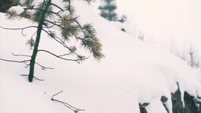 Weak pine tree growing on rocky cliff covered in snow. Snowing cold cloudy winter day, slow motion stock video