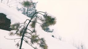 Weak pine tree growing on stone cliff covered in snow. Snowing cold cloudy winter day, slow motion stock video footage