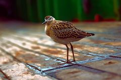 Weakened bird flight sea and sat on deck of ship. Stock Images