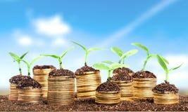 Wealth. Concept thai money tree bank euro royalty free stock photos