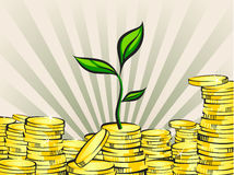 Wealth growing concept, money tree with coins stacks, vector illustration.  Royalty Free Stock Photo