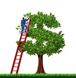 Wealth Management. And financial advice with a businessman on a red ladder managing the growth of a money tree shaped as a dollar sign on a white background Royalty Free Stock Images