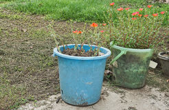 Wear out water buckets are used for flowerpots. Reuse old bins in flower garden. Royalty Free Stock Image