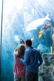 Wear view of a couple taking photo of fish Royalty Free Stock Images