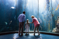 Wear view of family looking at fish tank Stock Photos