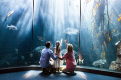 Wear view of family looking at fish tank. At the aquarium stock photography