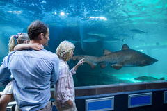 Wear view of family looking at shark in a tank Royalty Free Stock Photos