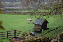 Weardale country scene with donkey Royalty Free Stock Images
