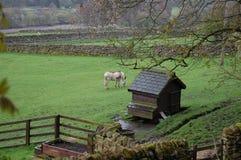 Weardale-Landszene mit Esel Lizenzfreie Stockbilder