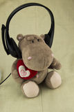 Wearing earphones hippo. Listening to music, looks very cute Royalty Free Stock Photography