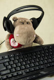 Wearing earphones Hippo typing on a keyboard Royalty Free Stock Image