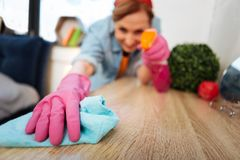 Resolute accurate woman fighting with dust in her apartment. Wearing protective gloves. Resolute accurate woman fighting with dust in her apartment and spraying royalty free stock photo