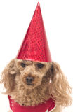 Wearing A Red Birthday Hat Stock Images