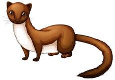 Weasel Stock Image