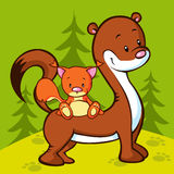 Weasel and squirrel in the wood Stock Photography