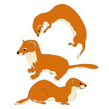 Weasel vector illustration Stock Photos