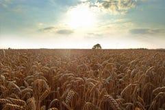 weat неба поля серебряное Стоковая Фотография