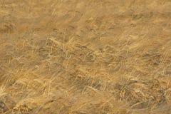 Weat-Feldhintergrund Stockbild
