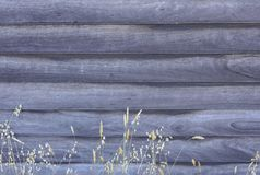 Weather-Board background, with blue gray colour, and pale yellow grass seed spikes royalty free stock photography