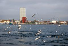 Weather on a Klaipeda port - autumn waves, wind and flying seagulls Royalty Free Stock Images