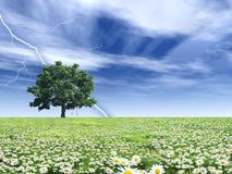 Weather phenomenon. Flourishing field during a thunderstorm Royalty Free Stock Images