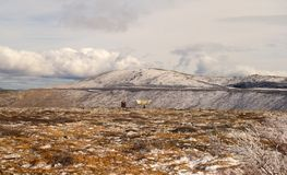 A frozen landscape in the arctic springtime Royalty Free Stock Photography