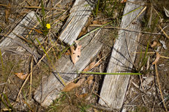 Weatherboard timber lying on the ground. Detail of old and weathered pieces of weatherboard timber lying on the ground stock images