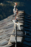 Weathercock on the house roof. An iron made weathercock placed on the slate roof of a rural high mountain house Stock Image