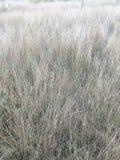 Weathered干草的领域作为背景 免版税库存照片
