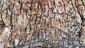 Weathered agrietó la corteza de madera del árbol muy viejo Fotografía de archivo
