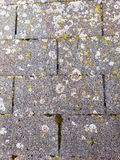 Weathered asphalt roof shingles means roof needs to be fixed or replaced. Moss and vegetation growing on roof is usually a good indicator that the house needs a stock image