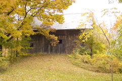 Weathered Barn. An old barn on an abandoned farm, worn from weather and neglect seen from a side view framed by trees in fall foliage Stock Images