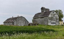 Weathered Barn & Horse Barn Stock Photos