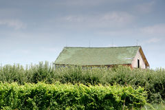 Weathered barn in a Michigan orchard Royalty Free Stock Image