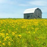 Weathered Barn. A weathered barn stands in a field of wildflowers in Southern Indiana Stock Images