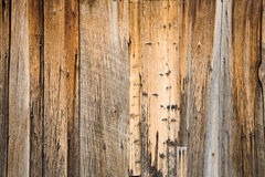 Weathered Barn Wood Background. Weathered Aged Barn Wood and Nails Textured Background royalty free stock images