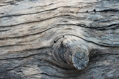 Weathered barn wood background with knots. brown old wood, sepia color. texture for background.  Royalty Free Stock Image