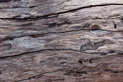 Weathered barn wood background with knots. brown old wood, sepia color. texture for background.  Royalty Free Stock Photo
