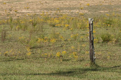 Weathered Cedar Post Barbed Wire Pasture Stock Photography