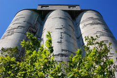 Weathered concrete silos with trees. Looking up at a group of three weathered concrete silos with trees in the foreground royalty free stock photos