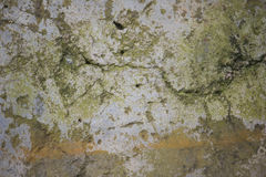 Weathered concrete texture. A close up of worn concrete with growth on it Stock Image