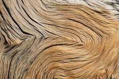 Contorted Wood Grain. Weathered and contorted wood grain background texture royalty free stock image
